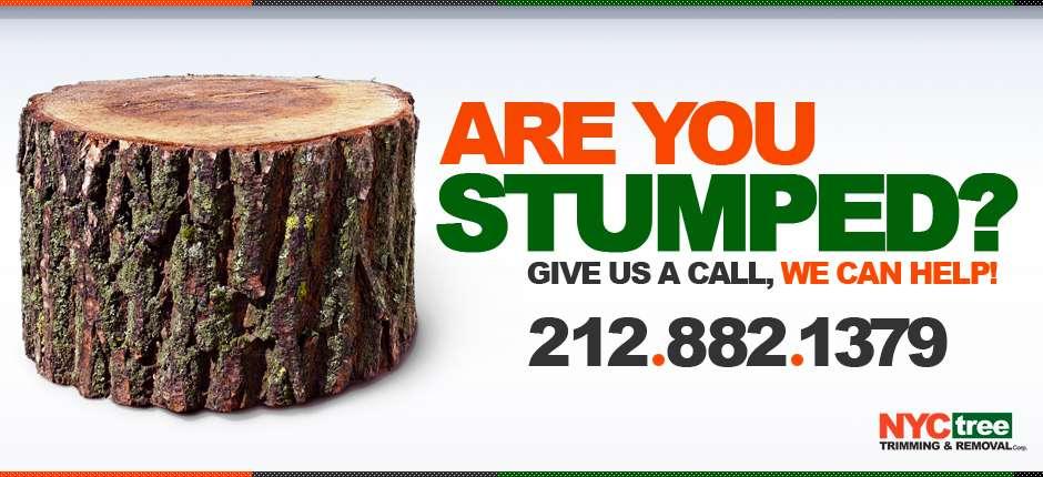 NYC-Tree-2013-Website-Slider-Stumped