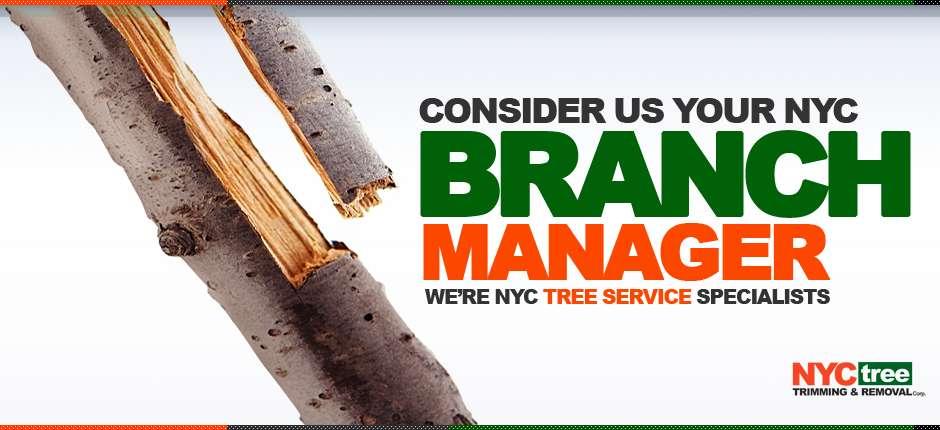 NYC-Tree-Slider-BRANCH-MANAGER